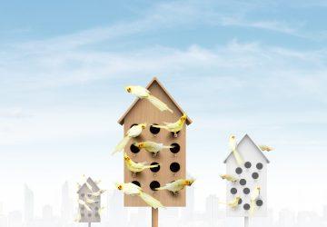 House Off, les oiseaux chantent